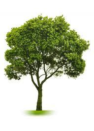 drzewo01
